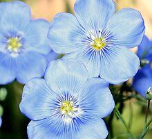 Blue Pair by Charleespics