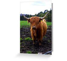 Highland Stirk Greeting Card