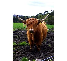 Highland Stirk Photographic Print