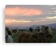 Cow sky Derry Ireland Canvas Print