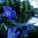 flowers by Brodyn  Beveridge