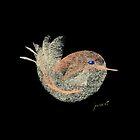 Little Bird by Ziarel