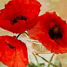 Poppies by inkedsandra