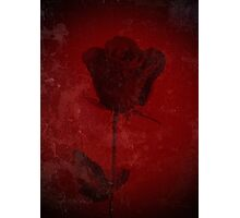 Symbol Of My Love Blooming Red Rose Digitally Enhanced Photograph Photographic Print