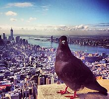 Empire Pigeon  by weegoodie