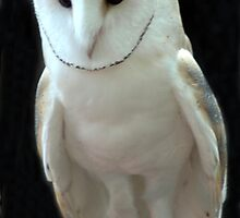 Snow Owl by Kathleen Struckle