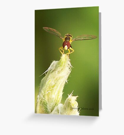 Tiny Insect Greeting Card