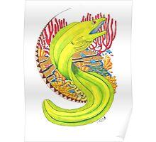 Moray Eel Poster