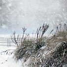 Snowy Skies by Susan Werby