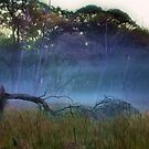 """""""A Break in the Fog"""" by Phil Thomson IPA"""