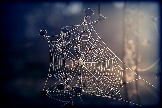 Spiders Sunrise by James McKenzie
