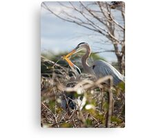 Great Blue Herons Canvas Print