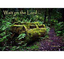 """Wait"" Photographic Print"