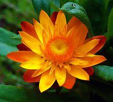 Yellow and Orange by ERick