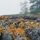 Misty Maine by trand07