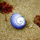 Sea shell by sparrowdk