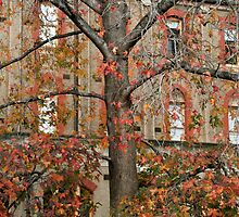 convent tree by Esther Frieda