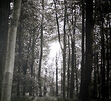 Bluebell wood by Amanda Gazidis