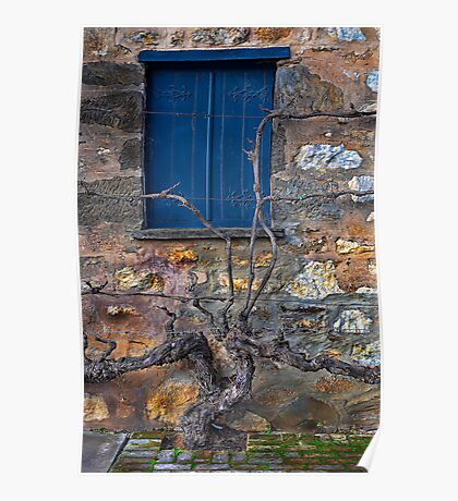 Winery Window Poster