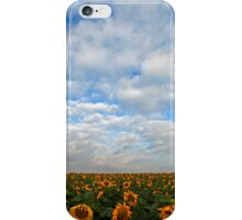 sunflowers in a field Photographed in Israel in May iPhone Case/Skin