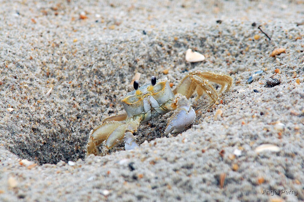 Mr. Crabs by Angel Perry