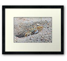 Mr. Crabs Framed Print