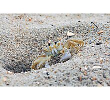 Mr. Crabs Photographic Print