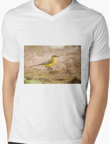 Yellow wagtail (Motacilla flava). Mens V-Neck T-Shirt
