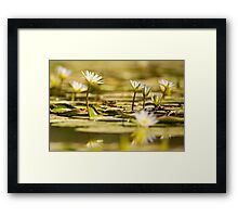 Nymphaea caerulea, known primarily as blue lotus (or blue Egyptian lotus) Framed Print