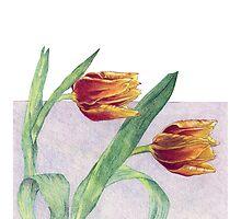 Tulips by Mariana Musa