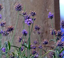 a little lavender by louise linskill