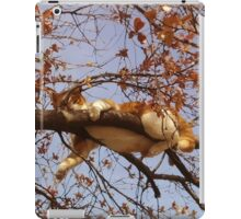 Cat on a tree iPad Case/Skin