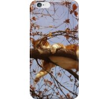 Cat on a tree iPhone Case/Skin