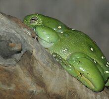Green Tree Frog. by Aussiebluey