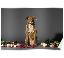 sitting brown dog with flowers on the set Poster