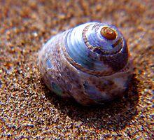tajma-shell ... by SNAPPYDAVE
