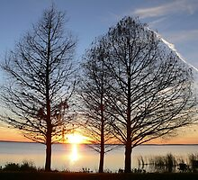 Bare Tree Sunset over Lake Apopka by kevint