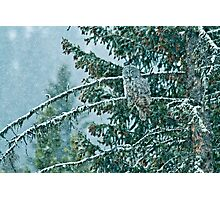 Great Grey Owl in a Snowstorm Photographic Print