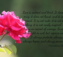 Pink Rose with 1 Corinthians 13:4-7 by AngelaBishop