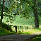 Tranquil Path. by artgoddess