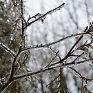 Frozen Season by 319media