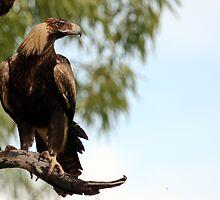 Eagle-eyed by Stuart Cooney