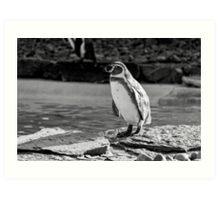 Penguin in Black & White Art Print