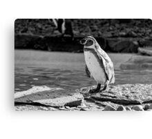 Penguin in Black & White Canvas Print
