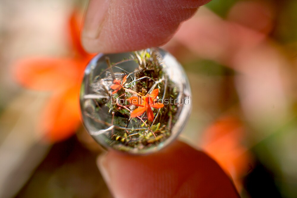 Crystal Ball Orange Orchid by Donell Trostrud