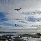 A Sky Full Of Birds........... by lynn carter