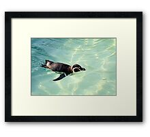 Swimming Penguin Framed Print