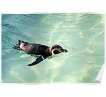 Swimming Penguin Poster
