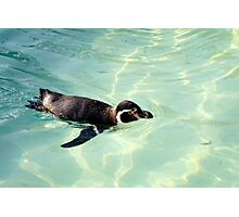 Swimming Penguin Photographic Print