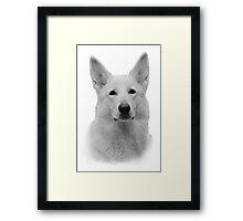 White German Shepherd Framed Print